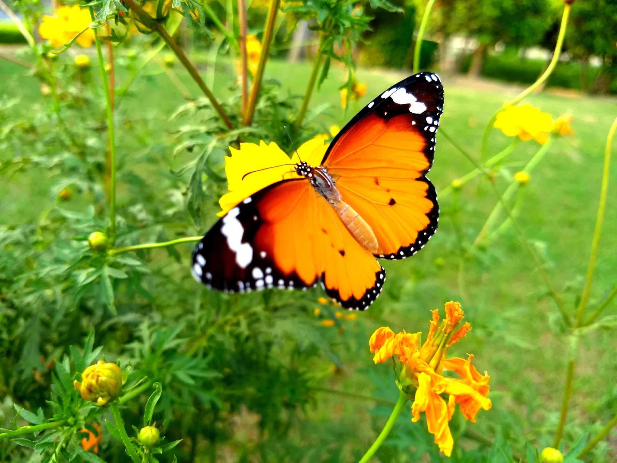 Butterfly Slot Machine gratis